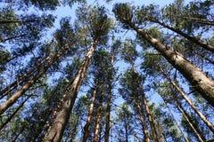 Oberseite der Bäume Stockbild