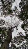 Oberseite der Bäume lizenzfreie stockbilder