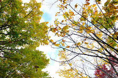 Oberseite der Kiefers im Wald Lizenzfreies Stockbild