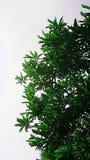Oberseite des Baums Stockbilder