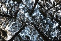 Oberseite des Waldes Stockbild