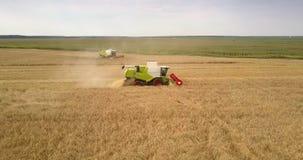 Oberseiteansicht, die reifen Weizen der Mähdrescherschnitte erntet stock video