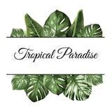 Oberster unterer Rahmen des tropischen Paradieses Exotisches Dschungelregenwaldgrün Palme monstera Philodendronblätter lizenzfreie abbildung