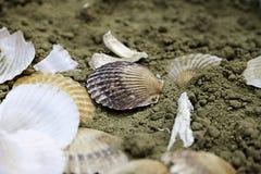 Oberteile auf dem Sand Stockfotos