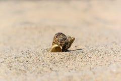 Oberteile auf dem Sand durch das Meer an einem sonnigen Tag Stockbilder