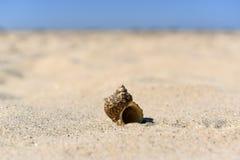 Oberteile auf dem Sand durch das Meer an einem sonnigen Tag Stockbild
