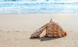 Oberteile auf dem Strand Stockfoto