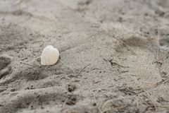 Oberteile auf dem Strandsand Lizenzfreies Stockfoto