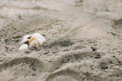 Oberteile auf dem Strandsand Lizenzfreies Stockbild