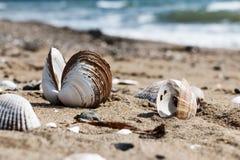 Oberteile auf der Küste Stockfotos