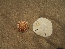 Oberteile auf einem leeren Strand stockfoto