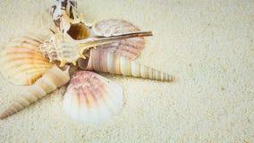 Oberteile auf sandigem Strand in der netten Bildung Stockfotos
