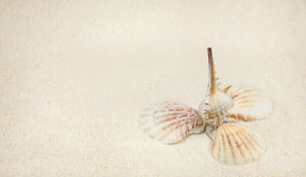 Oberteile auf sandigem Strand in der netten Bildung Lizenzfreie Stockfotos