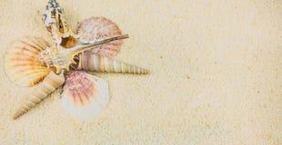 Oberteile auf sandigem Strand in der netten Bildung Stockbild