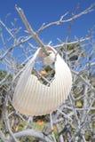 Oberteile, die in einem Baum hängen Stockfotografie