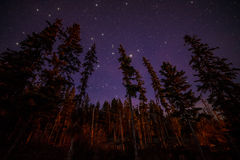 Oberteile immergrüne Bäume nachts mit Sternen Stockfotografie