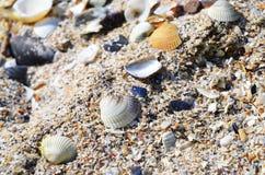 Oberteile, Kamm-Muscheln, Nerite, Kegel auf dem Strand Lizenzfreie Stockfotografie