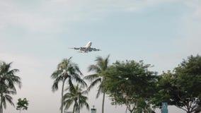 Oberteile Palmen flattern vom Wind im Himmelfliegenflugzeug schuß Flugzeugfliegen über klarem blauem Himmel und Palme stock video footage