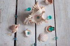 Oberteile, Perlen, Meer, Hintergrund, weißer Hintergrund, hölzerner Hintergrund, Seeoberteile lizenzfreie stockfotografie