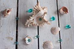 Oberteile, Perlen, Meer, Hintergrund, weißer Hintergrund, hölzerner Hintergrund, Seeoberteile stockfotografie