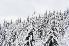 Oberteile Tannenbäume mit vielen Schnee Weiße Winterwaldlandschaft Stockfoto