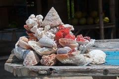 Oberteile und Korallen lizenzfreie stockfotografie