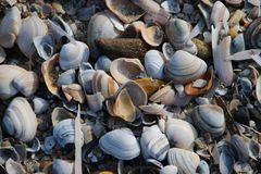 Oberteile und Rasierklingen auf dem Strand entlang dem Ufer der Nordsee bei Katwijk, die Niederlande lizenzfreie stockfotografie