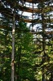 Obervatório da caminhada da parte superior da árvore Imagem de Stock