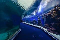 Obervatório subaquático do aquário Foto de Stock Royalty Free