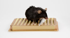 Obese mouse on tube rack Royalty Free Stock Photos