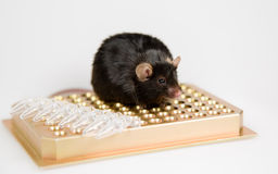 Obese mouse on tube rack Royalty Free Stock Photography