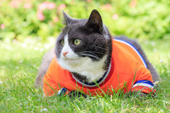 Obese orange. Random image of a fat cat dressed as soccer player for the dutch national team relaxing in the garden in spring in the Netherlands stock image