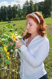 Obese redhead woman in a sunflower field. Royalty Free Stock Photo
