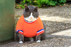 Obesicat in the garden. Random image of a fat cat dressed as soccer player for the dutch national team exercising in the garden in spring in the Netherlands royalty free stock photos