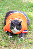 Obesicat in orange. Random image of a fat cat dressed as soccer player for the dutch national team relaxing in the garden in spring in the Netherlands royalty free stock photography