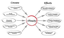 Obesidade: causas e efeitos ilustração do vetor