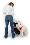 Obey. Woman with her two dogs on white background. Training dogs stock images