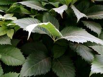 Obfitość greenery fotografia stock