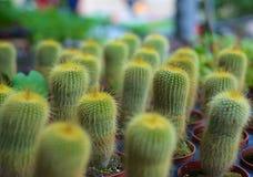 Obfitość kaktus w zieleń ogródzie zdjęcie stock