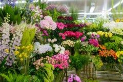 Obfitość kwiaty obrazy royalty free