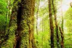 Obfitość las wewnątrz, Tajlandia fotografia royalty free