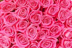 Obfitość różowi naturalnych róż bezszwowego tło Fotografia Royalty Free