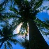 Obfitolistni drzewa ciskający cień Obrazy Royalty Free