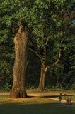 Obfitolistni drzewa i dziecko ma wolnego czas w parku przy zmierzchem w Tielt Zdjęcia Royalty Free