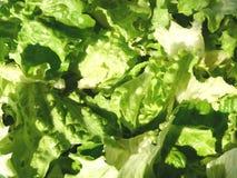 obfitolistni warzywa Zdjęcia Royalty Free