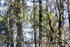Obfitolistni zieleni drzewa Zdjęcie Royalty Free