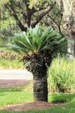 obfitolistny drzewo Zdjęcia Stock