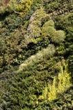 Obfitolistny vertical ogród Zdjęcia Royalty Free