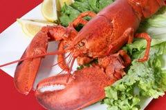 obiad homara Obraz Stock