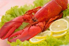 obiad homara Fotografia Royalty Free